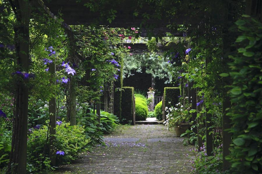 12. Long pergola of clematis in full bloom in Jardin de Castillon
