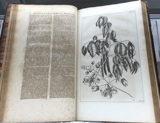 Herbarium Anboinense, 1740