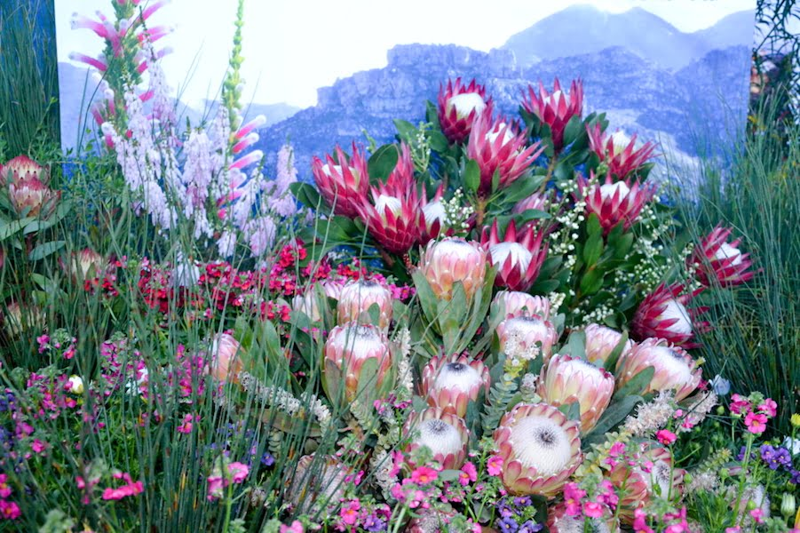 SANBI-Kirstenbosch - South African Chelsea Exhibit 2016 at Garden World