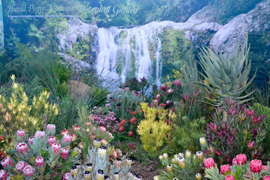 SANBI-Kirstenbosch - South African Chelsea Exhibit 2016 rebuilt at Garden World