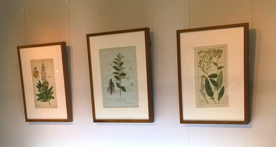 Some of the framed illustrations donated by Barry Kinnaird