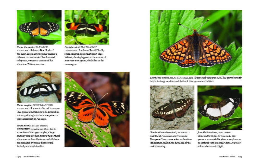 1000 Butterflies 272-273