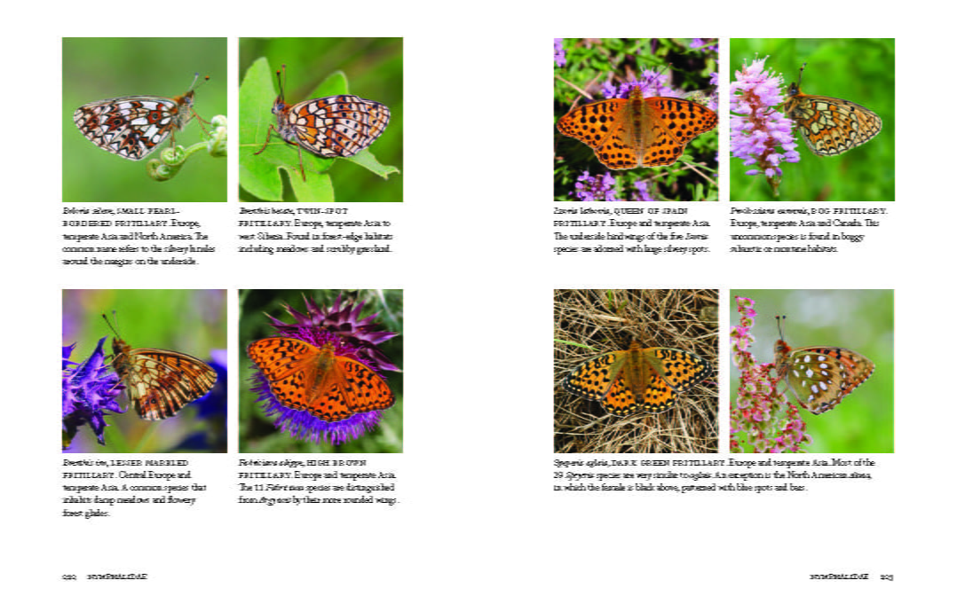 1000 Butterflies Page 222-223