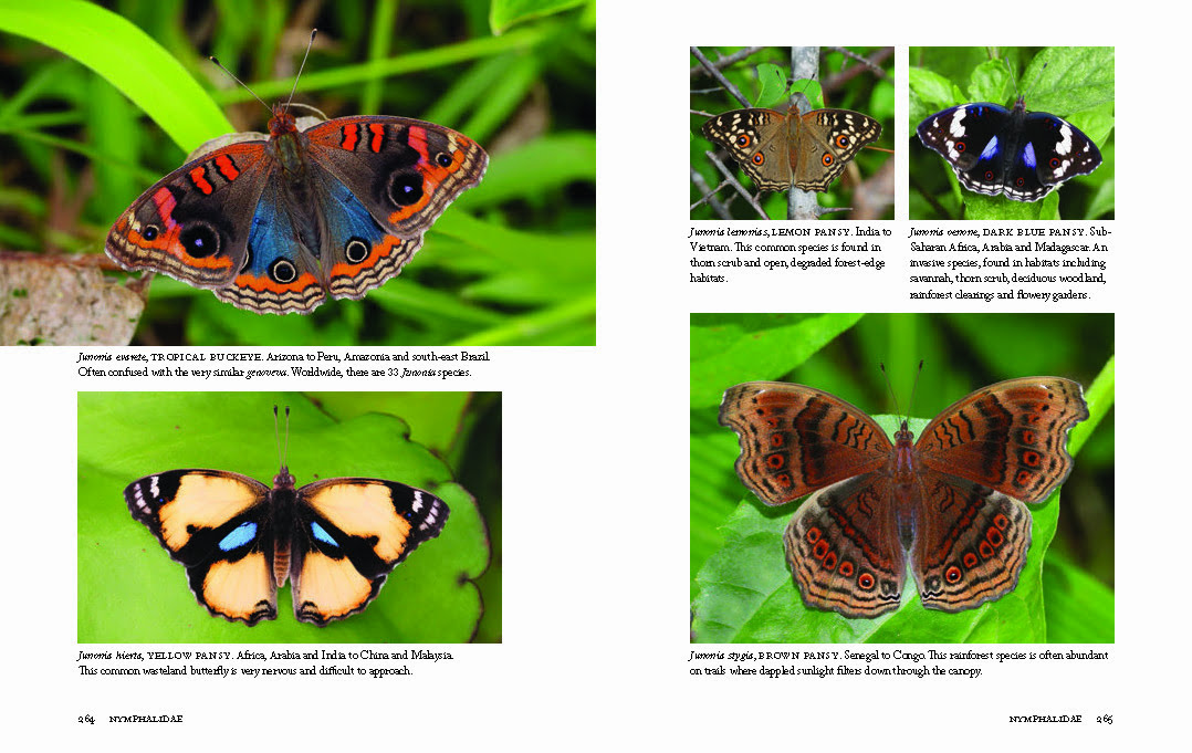 1000 Butterflies Page 264-265