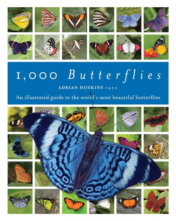 1,000 Butterflies by Adrian Hoskins cover
