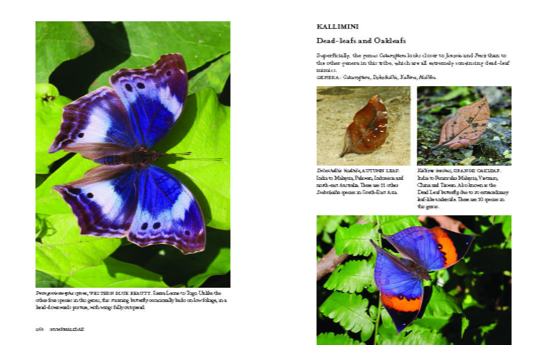 1000 Butterflies pages 268-269
