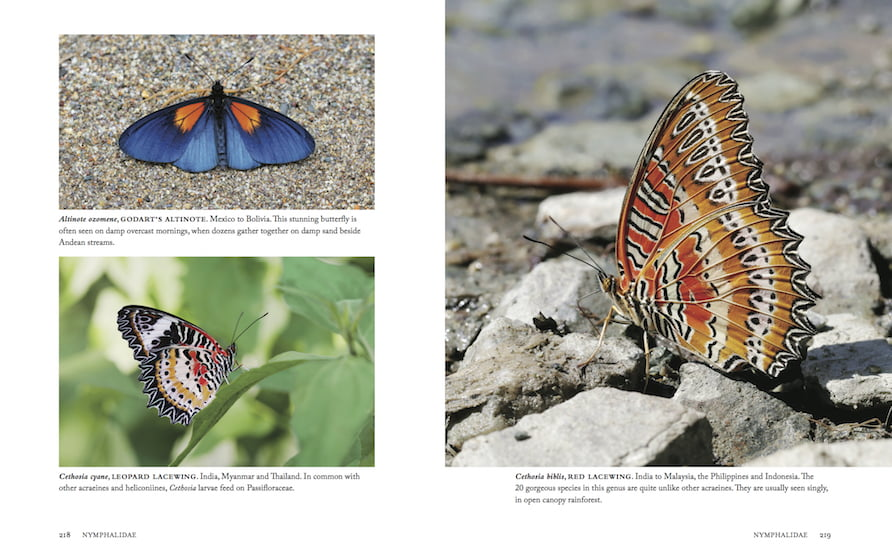 1000 Butterflies pp218-219
