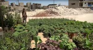Aleppo's Last Gardener