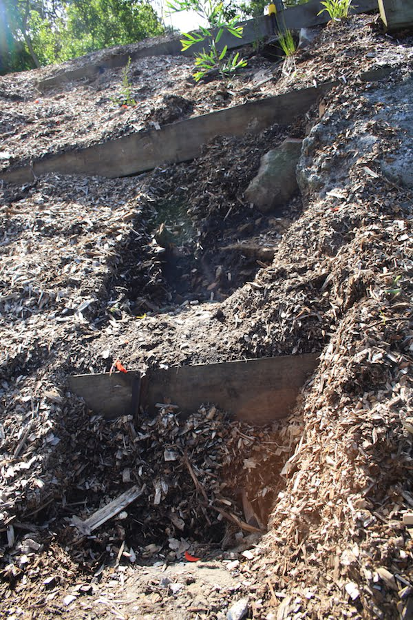Erosion gully created by surface runoff on steep ground at Bronte after heavy rain washed out mulch and soil. Note wooden terracing remains intact. Otherwise damage would have been much worse.