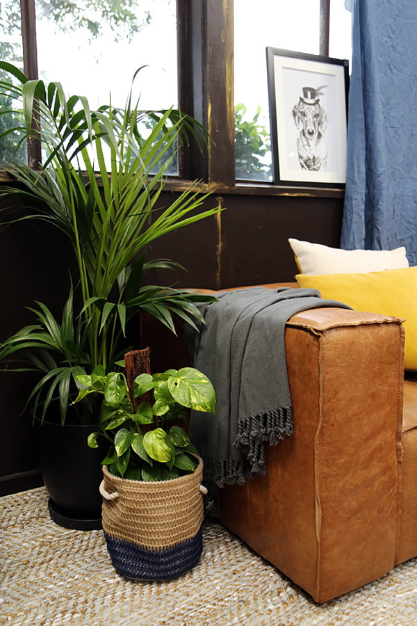 Lounge Room indoor plants style