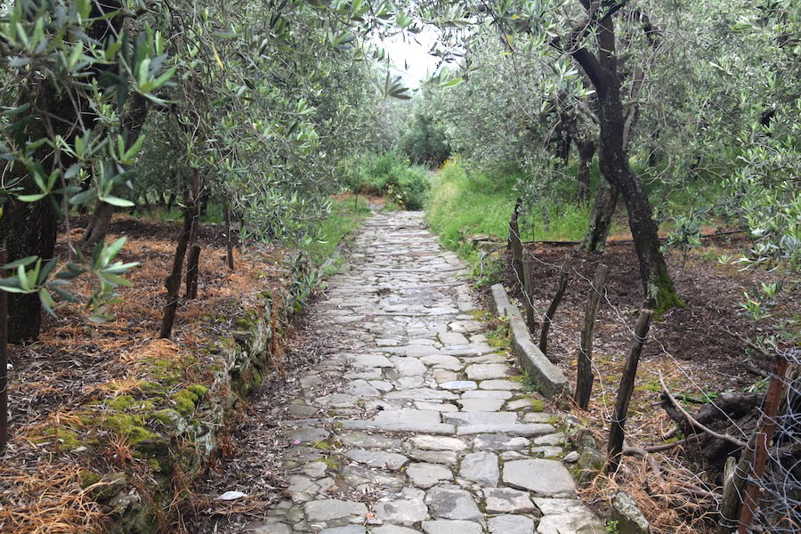 Stone path through the olive trees, Cinque Terre