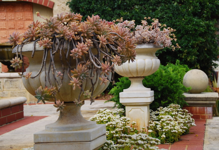 Succulents adorn pots in the formal courtyard