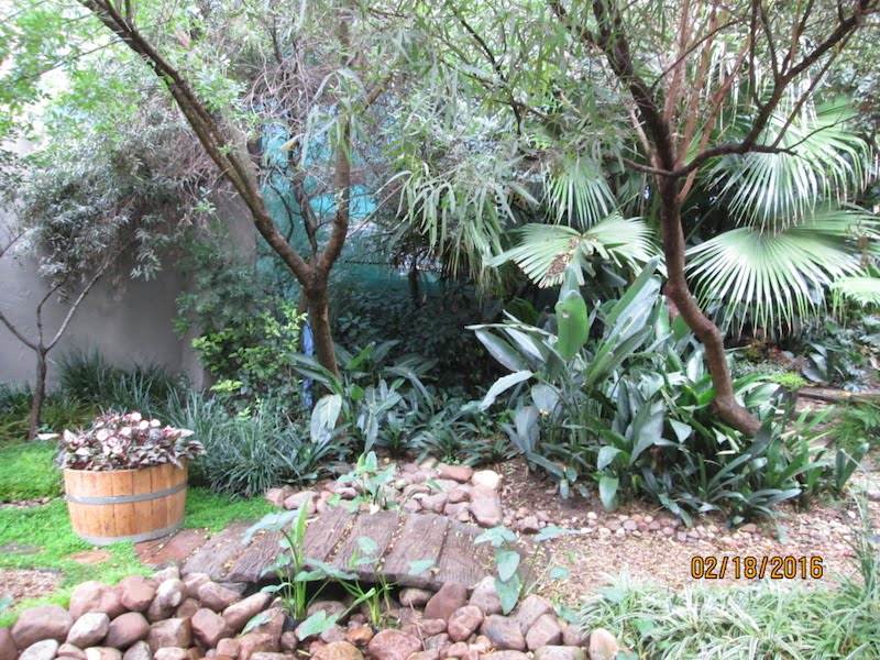 The garden before - there are some good foliage plants but the water feature is tired and needs updating