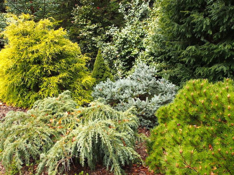 Conifer garden at Cloudehill garden, Victoria Australia