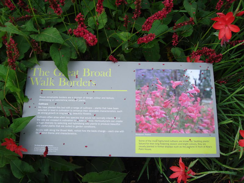 Interpretive signage Great Broad Walk Border, Royal Botanic Garden Kew UK