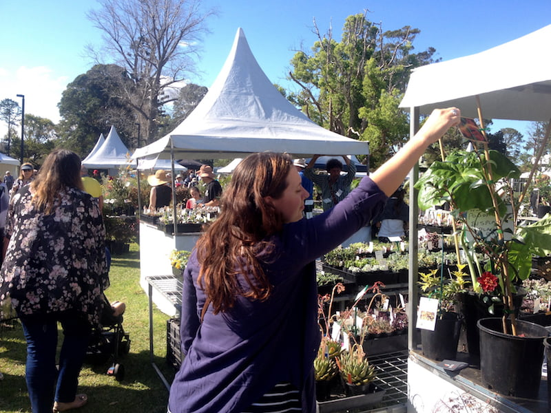 Plants enjoying being ogled at The Plant Lovers Fair on Saturday afternoon