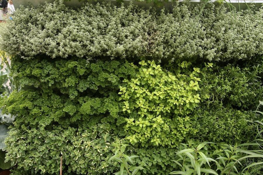 Herb vertical garden