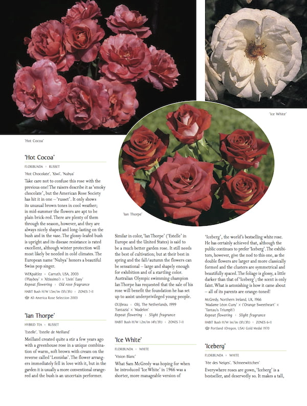 Macoboy's Roses p244