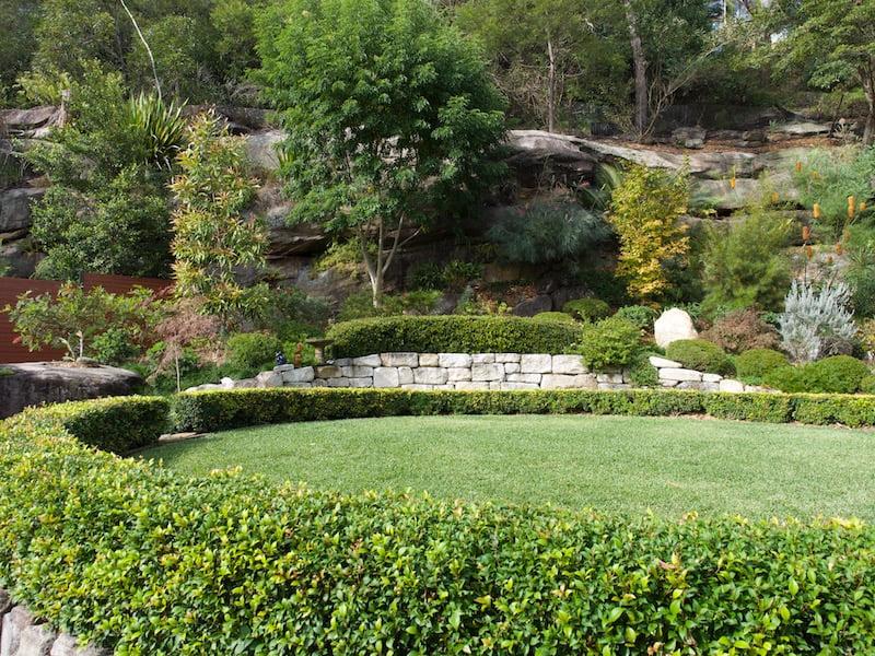 Joan's garden in Kareela with hedges of Acmena smithii 'Allyn Magic' (around circle) and Syzygium australe 'Bush Christmas' (above)