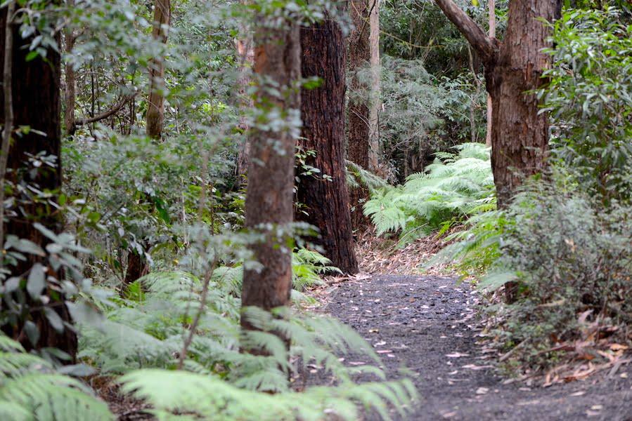 The lovely rainforest walk inside Illawarra Grevillea Park