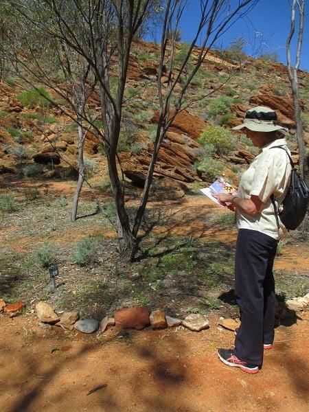 Olive Pink Botanic Garden in Alice Springs