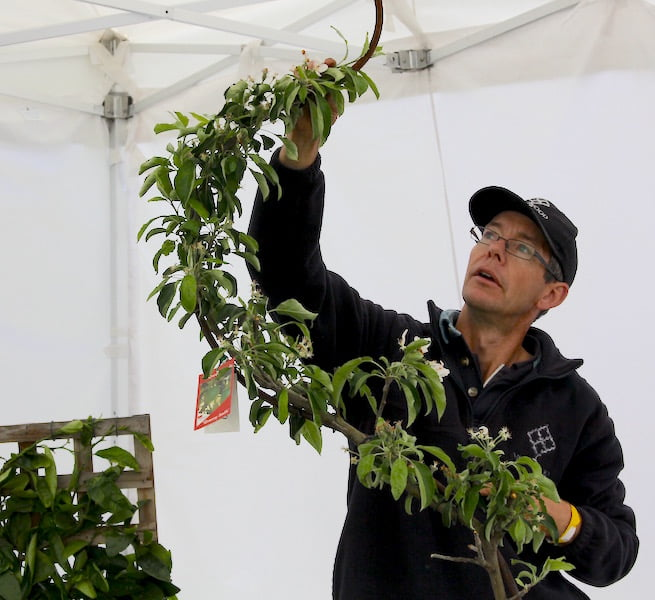 Chris England of Merrywood Plants demonstrating espalier pruning techniques at the Botanic and Rare Plant Fair