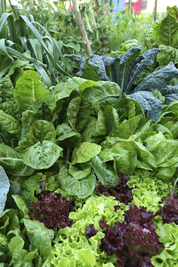 Leafy crops to grow at home