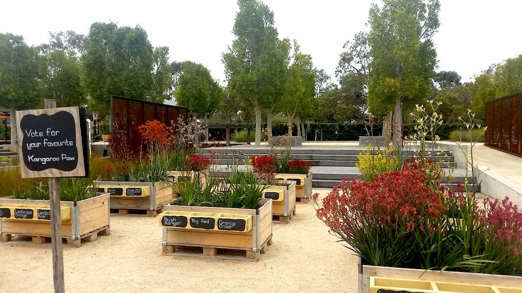 Vote for your favourite kangaroo paw at Cranbourne Gardens
