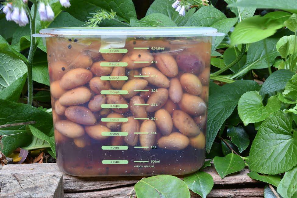 Brining the Cerignola olives
