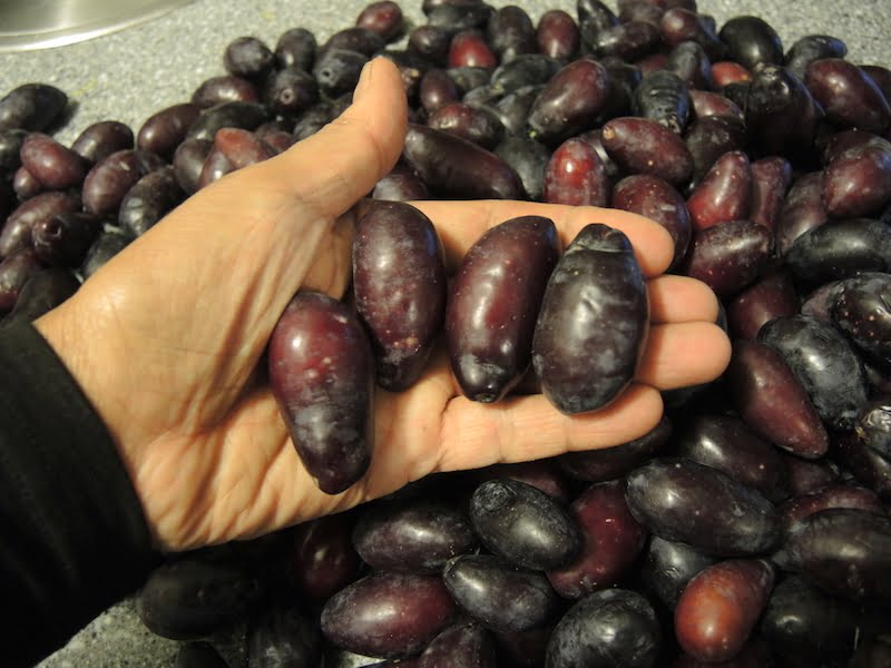 Huge cerignola olives