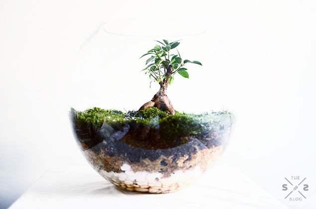 Substrate Layers In A Bonsai Terrarium Source Wee World Used With